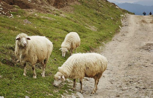 La faune occupe une place centrale dans le paysage caucasien.