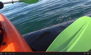Capture d'écran d'une vidéo YouTube montrant un couple de kayakistes perché sur le dos d'une baleine.