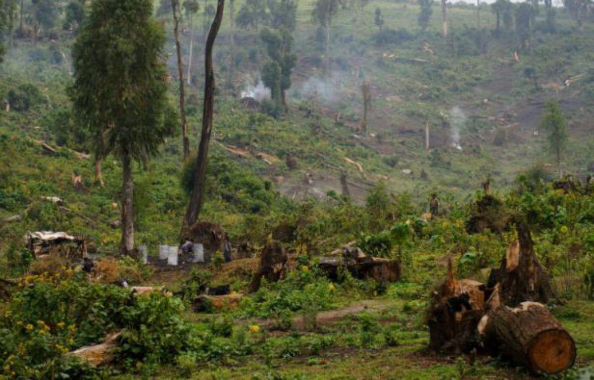 Des femmes congolaises produisent du charbon de bois en coupant des arbres, dans la forêt de Masisi en République démocratique du Congo, le 16 juillet 2012 – PHIL MOORE AFP