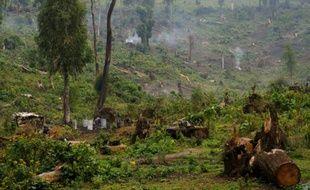 Des femmes congolaises produisent du charbon de bois en coupant des arbres, dans la forêt de Masisi en République démocratique du Congo, le 16 juillet 2012