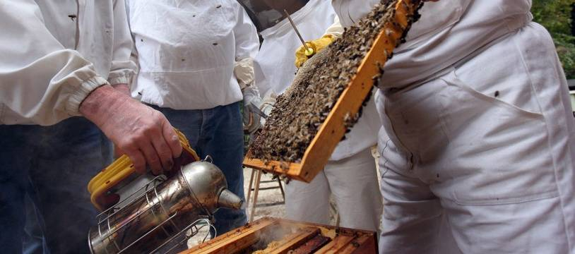 Des apiculteurs travaillent sur les ruchers du jardin du Luxembourg à Paris (image d'illustration).