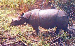 Ne sont-ils pas trop mignon ces rhinocéros de Java ? (Spoiler : Oui !)