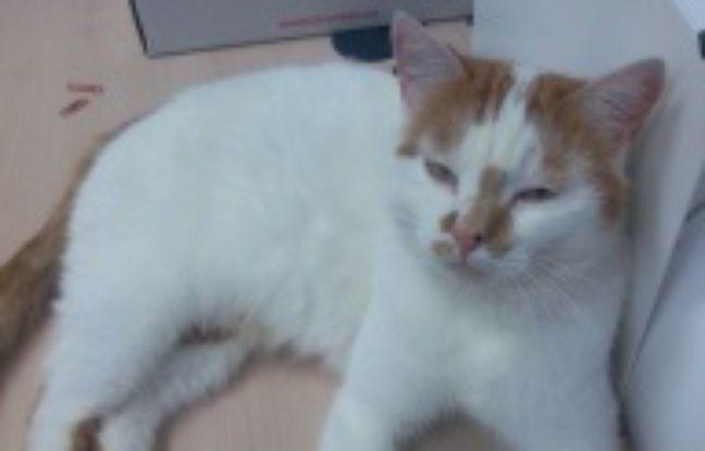Pas de calais un appel t moins pour retrouver un tueur de chat - Le roi du matelas saint martin boulogne ...