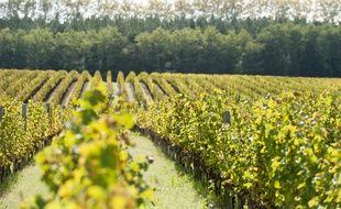 La filière viticole bordelaise veut redevenir leader de la filière AOC