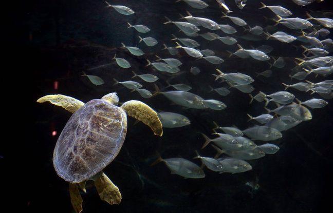 648x415 une tortue marine illustration