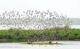 La réserve ornithologique du Teich, sur le Bassin d 'Arcachon.