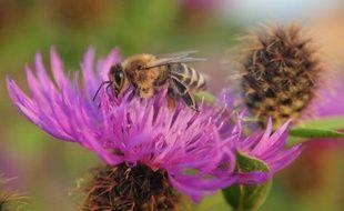 La hausse de la mortalité des abeilles pourrait avoir un impact sérieux sur la production alimentaire de l'Europe et la stabilité de l'environnement, ont mis en garde mardi les parlementaires européens.