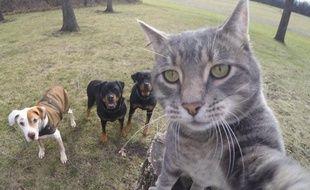 Manny, le chat qui prend des selfies.