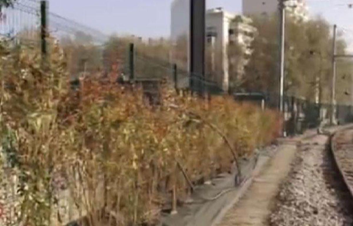 Des buissons épineux sont mis en place par la SNCF le long des voies ferrées. – 20 MINUTES