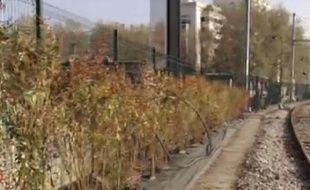 Des buissons épineux sont mis en place par la SNCF le long des voies ferrées.