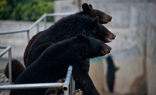 Des ours dans une ferme d'une entreprise qui commercialise la bile d'ours à Hui'an, en Chine, le 22 février 2012