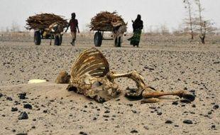 Des habitants d'une région du Kenya frappée par la sécheresse passent devant des carcasses de bétail, le 20 juillet 2011 au nord-est de Nairobi