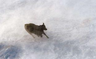 Au Texas, le blizzard a tué près de 15.000 vaches - Illustration.