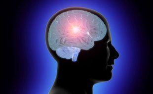 Illustration d'un cerveau humain.