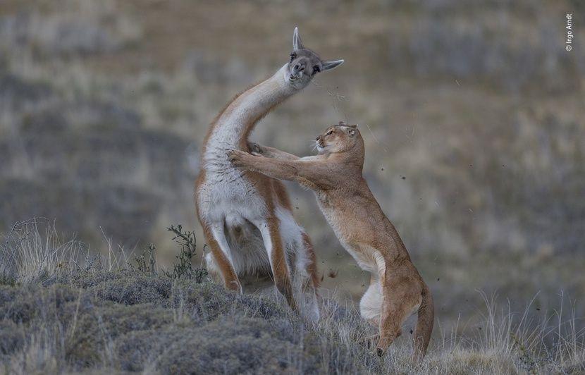 VIDEO. Photographie animalière: Les plus beaux clichés du Wildlife Photographer of the Year 2019