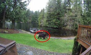 Un ours se promène avec son dîner. Il n'est pas végétarien - Le Rewind (video)