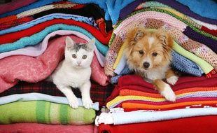 Illustration: Un petit chat et un petit chien.