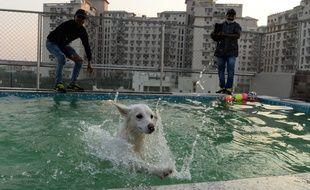 Les chiens ont accès à la piscine.