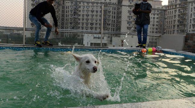 Inde le critterati premier h tel de luxe pour chiens for Hotels qui acceptent les chiens