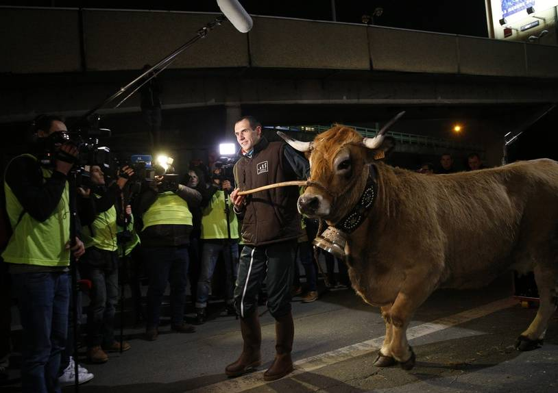 Haute, a 6-year-old Aubrac breed cow and the mascot for the 2018 Paris International Agriculture Fair (Salon de l'Agriculture) is led by her owner Livestock farmer Thibault Dijols from a trailer as she arrives ahead of the fair's opening at the Porte de Versailles exhibition centre in Paris on February 22, 2018. The Paris International Agriculture Fair is held from February 24 to March 4, 2018.