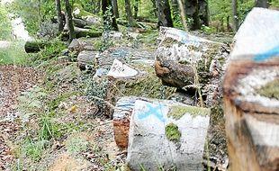 La filière bois, ici en forêt de Corbières, va devoir se développer.