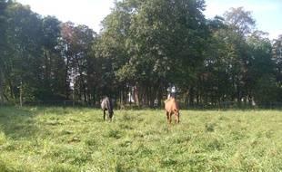 Quatre chevaux sont accueillis dès cette semaine dans le parc de 6 hectares de cet hôpital