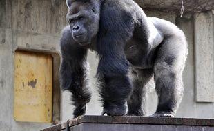 Un gorille dans un zoo japonais (illustration).