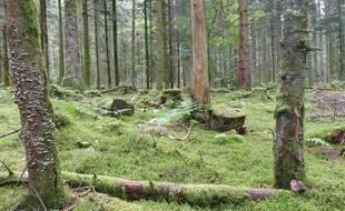 Le bain de forêt connaît un engouement récent.