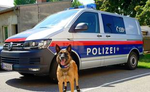Les chiens policiers ont des chaussons pour protéger leurs pattes de la chaleur.