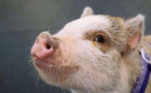 Illustration d'un cochon.
