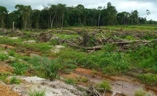 Les forêt primaire du Liberia en train de disparaître en 2013.