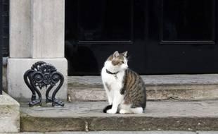 Larry le chat, contrairement à David Cameron, ne quittera pas le 10 Downing Street.
