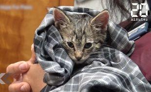 Ils sauvent la vie d'un chaton in extremis - Le Rewind
