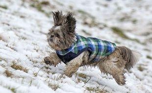 Illustration d'un chien jouant dans la neige, en janvier 2017 au Royaume-Uni.