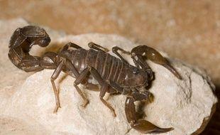 Le zoo de San Francisco propose aux amoureux éconduits d'adopter des scorpions ou des cafards pour la Saint-Valentin.