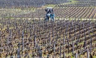 Des vignes en Bourgogne, le 23 mars 2020.