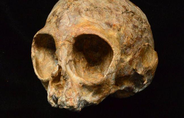 Lecrâne d'unjeune primate âgé de 13 millions d'années, fossile de grand singe le plus complet pour le Miocènedécouvert à ce jour,a été découvertprèsdu lac Turkana, en 2014.