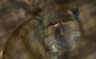Deux macaques n'avaient pas pu être capturés en mai, sur le site de Labenne, dans les Landes.