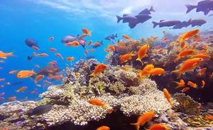 <Shark & Yolanda Reef en Égypte - Mer Rouge