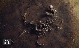 Un fossile de Tyrannosaurus Rex.