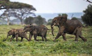 """Le Kenya va durcir les sanctions contre les braconniers et les trafiquants d'ivoire pour tenter de """"sauver"""" les éléphants, a annoncé le gouvernement samedi."""