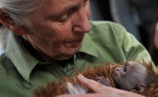 """La Chine exploite les richesses de l'Afrique comme les colonisateurs européens, avec des conséquences dramatiques pour l'environnement et les derniers espaces sauvages, dénonce la primatologue Jane Goodall, qui voit """"un début de prise de conscience"""" dans certaines mesures récentes prises par Pékin."""