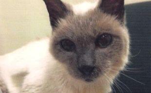 A 30 ans, Scooter est devenu ce 9 mai 2016 le chat le plus vieux du monde.