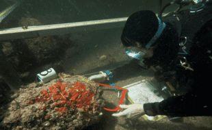 En Bretagne, des archéologues explorent les fonds de la Rance pour percer le secret de la mystérieuse épavec ZI24.