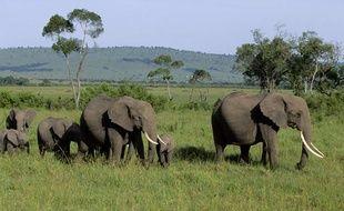 Eléphants dans le Masai Mara, au Kenya.