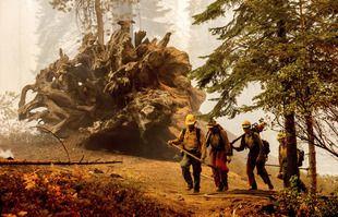 Les pompiers combattent le Windy Fire, en Californie, le dimanche 19 septembre 2021.