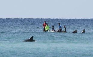 Des touristes évoluent aux côtés des dauphins en Floride (image d'illustration).