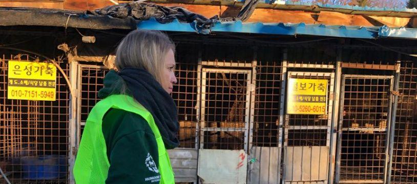 Les autorités ont commencé jeudi à démanteler le plus grand complexe d'abattage de chiens de Corée du Sud