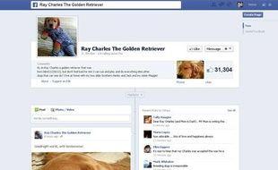 Capture d'écran de la page Facebook de Ray Charles, un golden retriever aveugle, le 29 mai 2013.