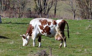 Le groupement d'éleveurs du Limousin construit un équipement de proximité d'un coût de 4,5 millions d'euros.